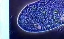 生物的细胞结构