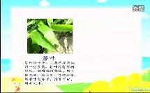 小学语文课《端午节的由来》优质课视频