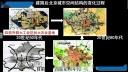 张老师带你学习人文地理-第三讲 城市和城市化(二) 城市与城市化知识梳理_(高中三年级地理)B11800