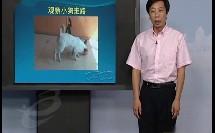 动物的运动(小学六年级科学)B862