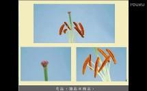花、果实和种子(小学科学_教科2001课标版_四年级下册)