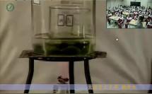 绿色植物是生物圈中有机物的制造者-大连市甘井子区育文中学