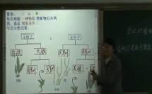 人教版生物八年级《尝试对植物进行分类》【于海莲】(第六届全国中小学交互式电子白板学科教学大赛)