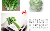 人教版_七年级上册_第二单元 第二章 细胞怎样构成生物体_第三节 植物体的结构层次_常见蔬菜根茎叶的区分微课