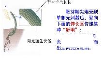 人教版_必修三_第 3 章 植物的激素调节_第 1 节 植物生长素的发现_高中生物 生长素的发现 仙游大济中学 蔡丽萍微课