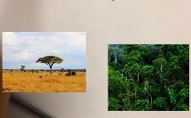 初中_地理_热带草原气候与热带季风气候的区分微课