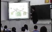 小学二年级,切开的果实教学视频王豪