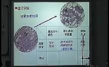 物质的跨膜运输的实例 龚丹 苏州