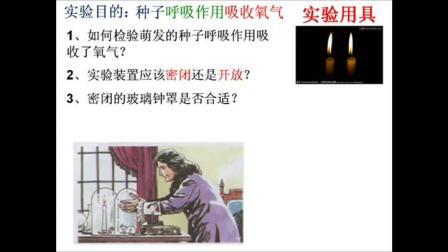 初中生物七年级上册《绿色植物的呼吸作用》北京