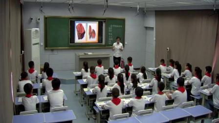 四年级科学《面对几种不知名的矿物》优秀教学视频-执教杨老师