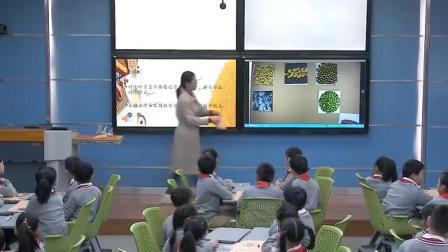 小学综合实践活动《来之不易的粮食》优质课教学视频13,河南省