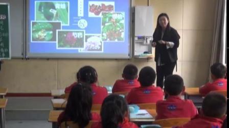 小学综合实践活动《跟着节气去探究》优质课教学视频23,四川省