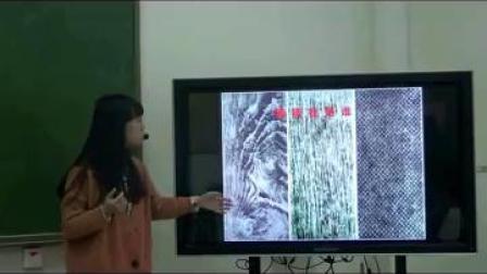 彩墨游戏(二)小学美术人美版-武汉市