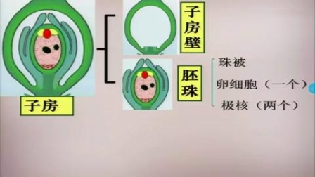 2017年初中生物课堂教学优质课评比视频录像《开花和结果》李娟(郑州市)
