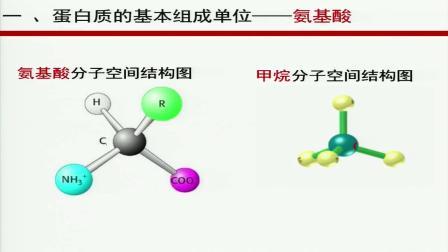 人教版高一年级必修一分子与细胞第2章第二节《生命活动的主要承担者蛋白质》湖南省优课