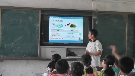 《8 蜻蜓与麻雀》教学(粤教粤科版小学科学三年级下册)