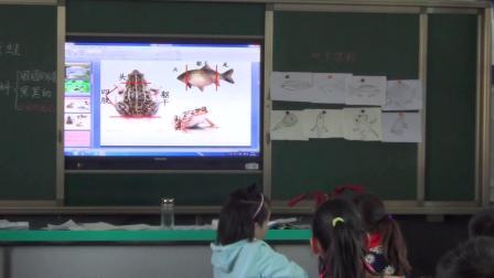《9 鲫鱼与青蛙》教学课堂实录(粤教粤科版小学科学三年级下册)