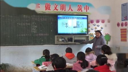《各种各样的花》优质课课堂展示视频-教科2001版小学科学六年级下册